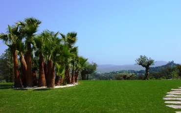 Saint Tropez Villa Ravanasierre land palm tree